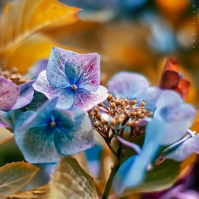 Нежные фото цветов от Oer-Wout 22 (700x700, 101Kb)