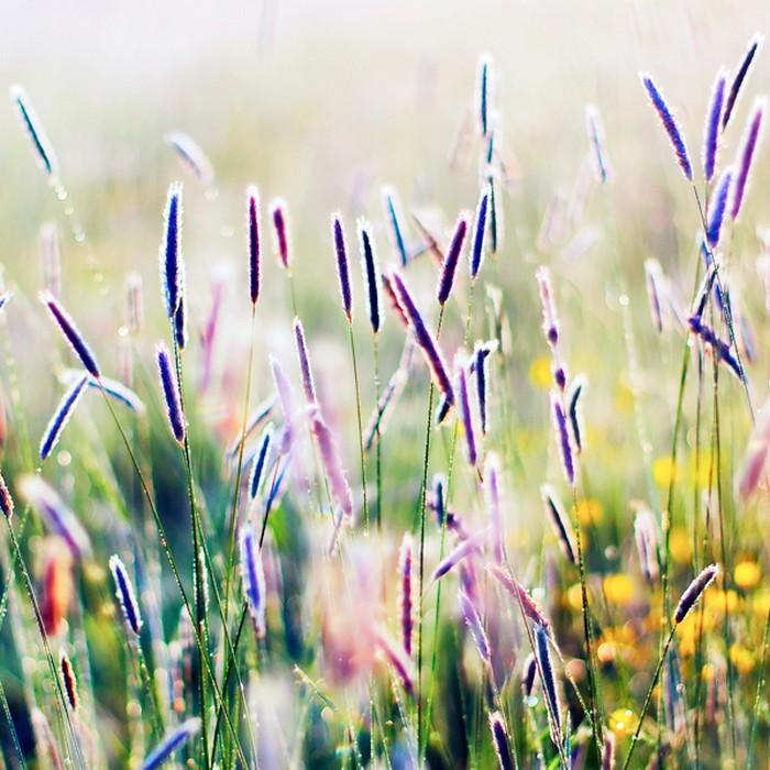 Нежные фото цветов от Oer-Wout 24 (700x700, 125Kb)