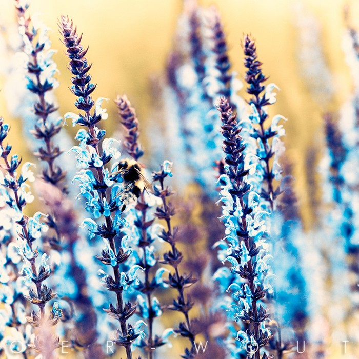 Нежные фото цветов от Oer-Wout 26 (700x700, 167Kb)