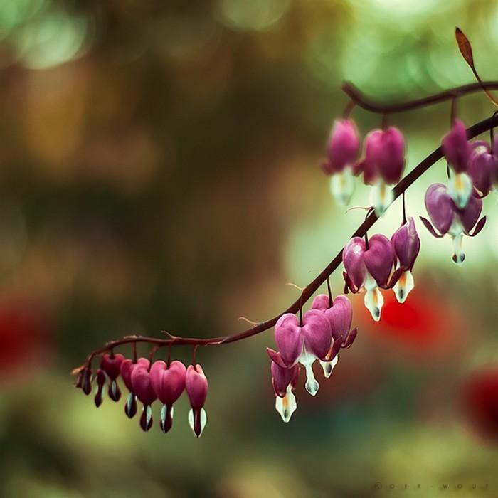 Нежные фото цветов от Oer-Wout 30 (700x700, 70Kb)