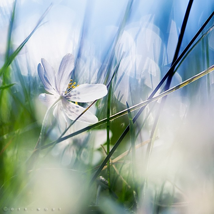 Нежные фото цветов от Oer-Wout 34 (700x700, 93Kb)