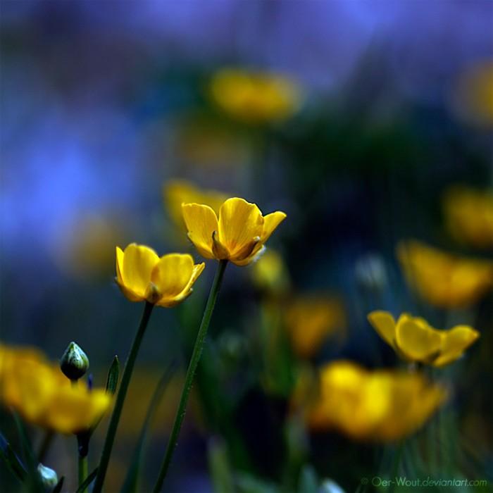 Нежные фото цветов от Oer-Wout 38 (700x700, 64Kb)