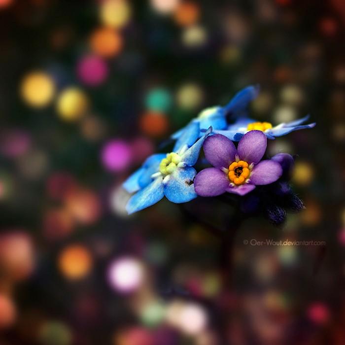 Нежные фото цветов от Oer-Wout 42 (700x700, 65Kb)