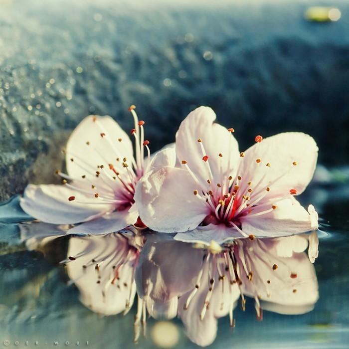 Нежные фото цветов от Oer-Wout 44 (700x700, 98Kb)