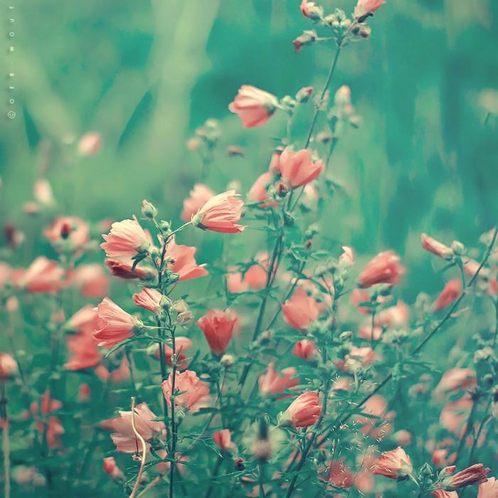 Нежные фото цветов от Oer-Wout 48 (700x700, 119Kb)