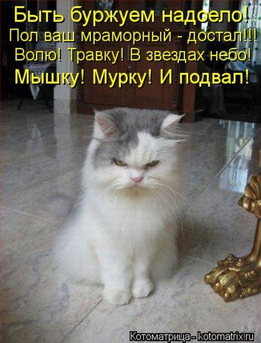 cm_20120706_01198_016 (533x700, 76Kb)