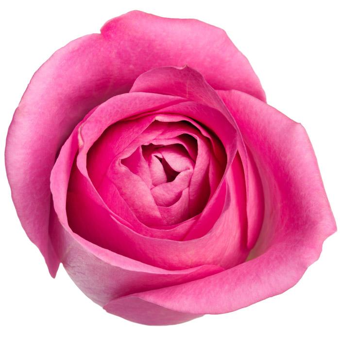 предметы розового цвета для детей расписание