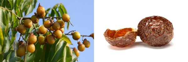 мыльные орехи мукоросси (600x200, 92Kb)