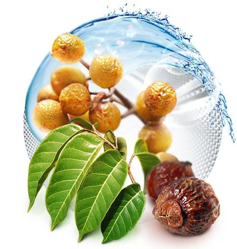 плоды мыльного дерева для стирки (484x508, 123Kb)