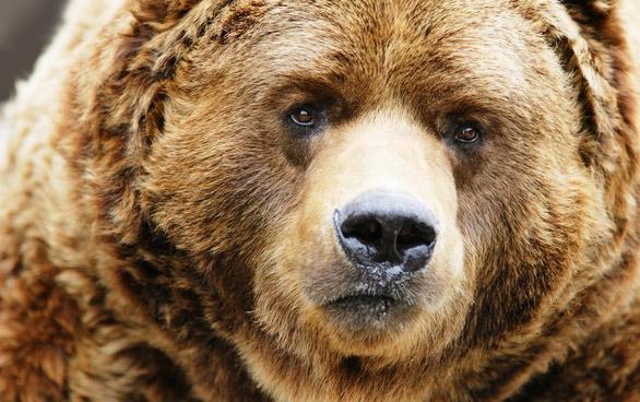 медведь - хозяин леса/4348076_R (586x368, 91Kb)