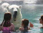 Превью bear-01 (325x250, 45Kb)