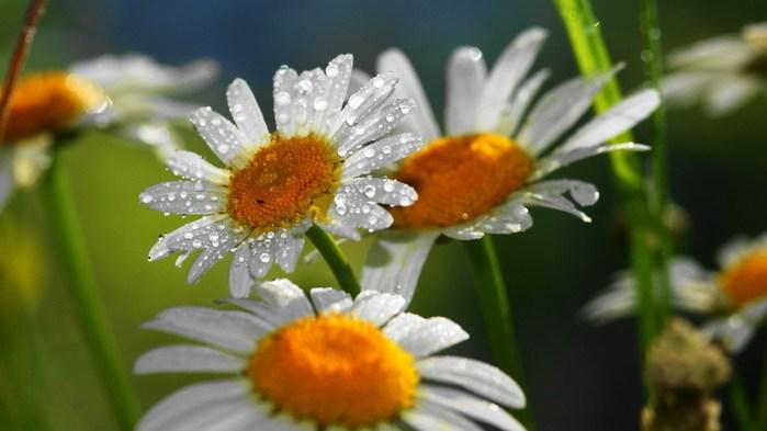 картинки на рабочий стол природа цветы № 516376 бесплатно