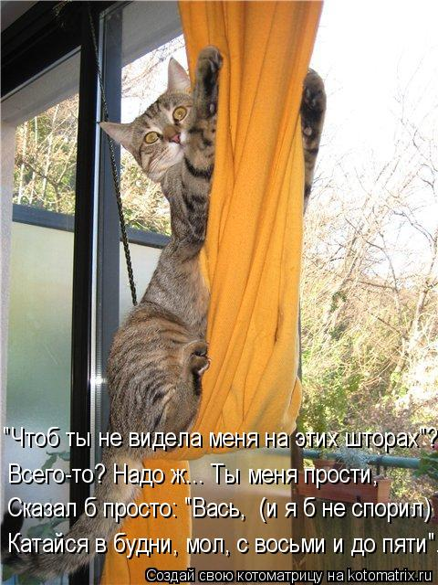 kotomatritsa_rv (480x640, 76Kb)