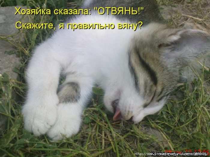 1342938304_kotomatritsa_08 (700x525, 135Kb)
