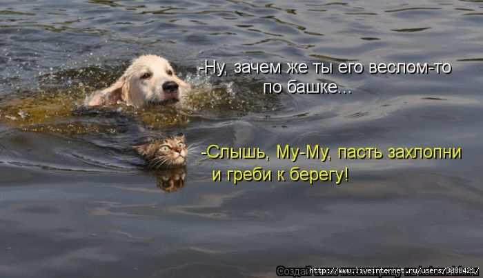 1342938313_kotomatritsa_05 (700x403, 95Kb)