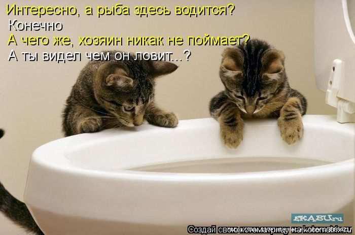 1342938367_kotomatritsa_13 (700x463, 104Kb)