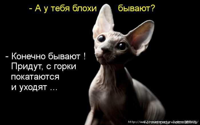 1342938384_kotomatritsa_09 (700x437, 65Kb)