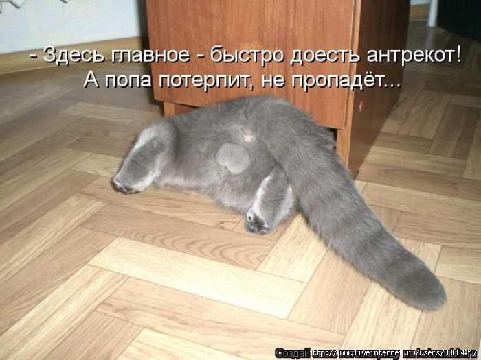 1342938396_kotomatritsa_14 (700x525, 126Kb)