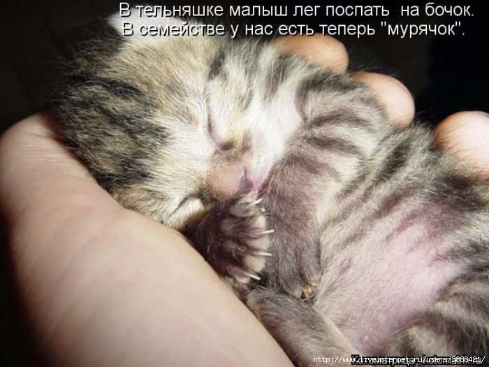 1342938433_kotomatritsa_20 (700x525, 130Kb)
