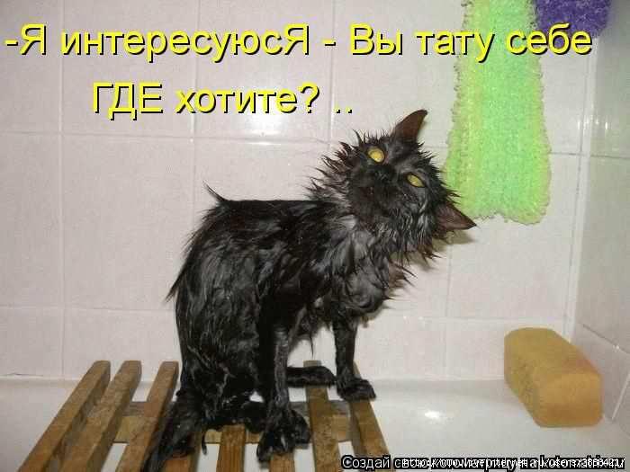 1342938444_kotomatritsa_23 (700x525, 124Kb)