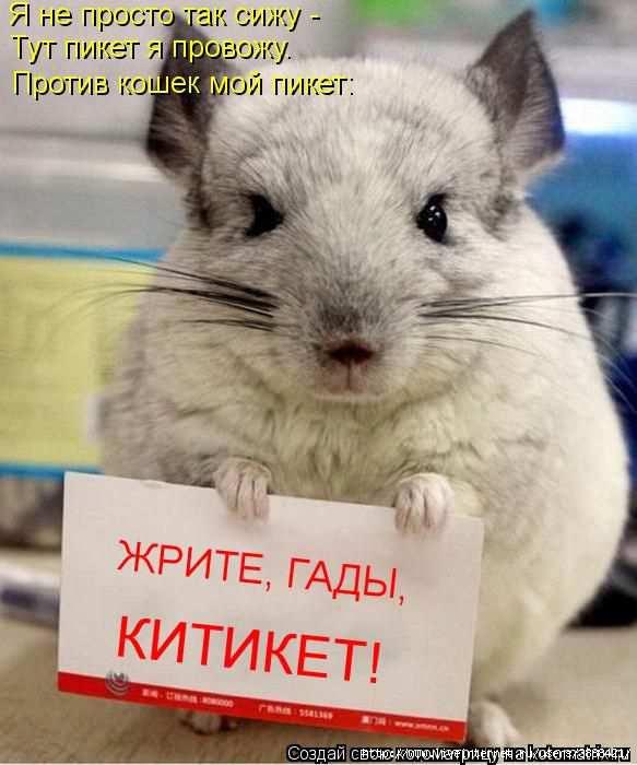 1342938472_kotomatritsa_18 (583x700, 142Kb)
