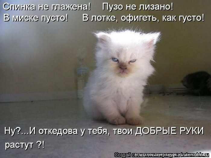 1342938491_kotomatritsa_27 (700x525, 109Kb)