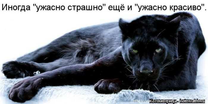 1342938521_kotomatritsa_30 (700x352, 90Kb)