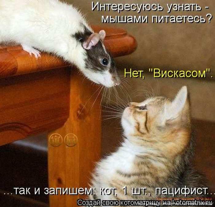 1342938531_kotomatritsa_24 (700x676, 188Kb)