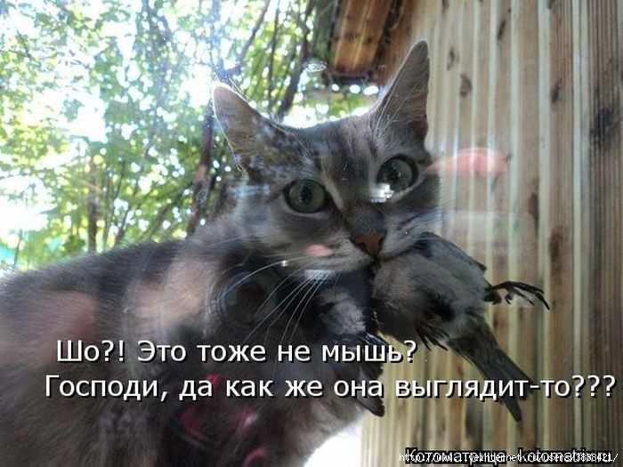 1342938553_kotomatritsa_37 (700x525, 159Kb)