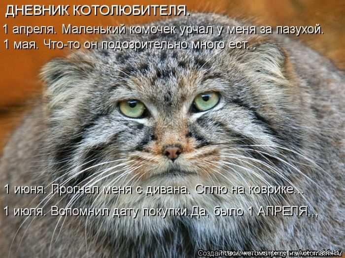 1342938592_kotomatritsa_43 (700x524, 206Kb)