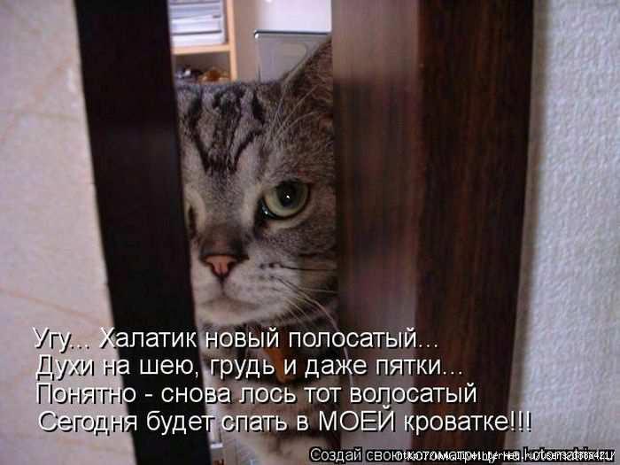 1342938600_kotomatritsa_36 (700x525, 128Kb)