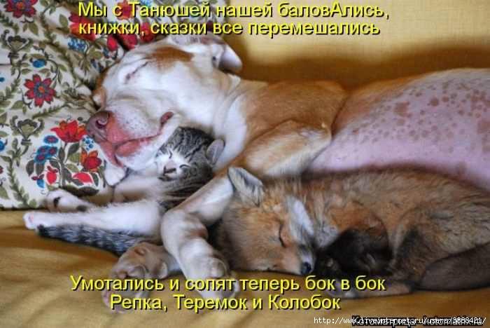 1342938619_kotomatritsa_46 (700x468, 147Kb)