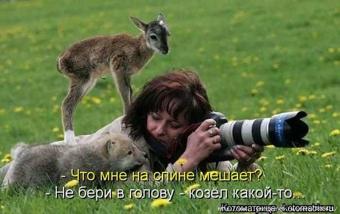 1342938657_kotomatritsa_45 (700x442, 126Kb)