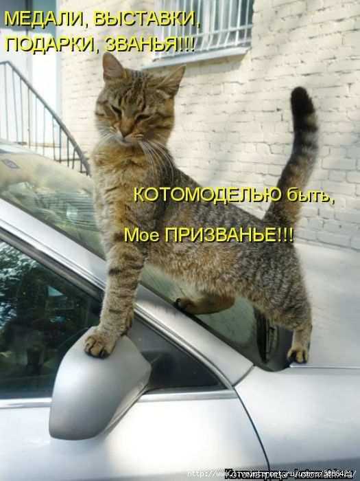 1342938698_kotomatritsa_50 (525x700, 140Kb)