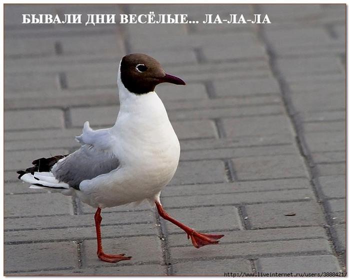 radionetplus_ru_pr_jivn2 (700x560, 224Kb)