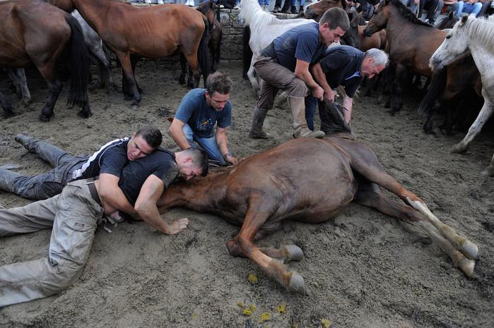 фестиваль клеймения лошадей испания (700x465, 144Kb)