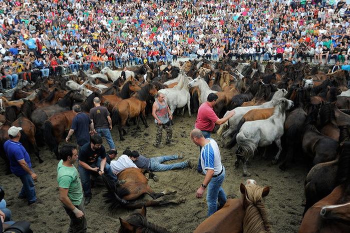 фестиваль клеймения лошадей испания 3 (700x466, 184Kb)