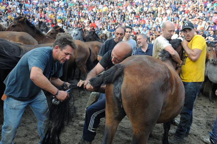 фестиваль клеймения лошадей испания 5 (700x465, 157Kb)