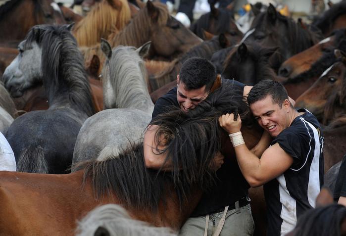 фестиваль клеймения лошадей испания 6 (700x477, 102Kb)