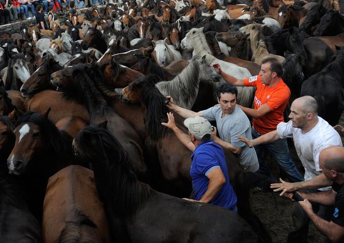 фестиваль клеймения лошадей испания 9 (700x496, 128Kb)
