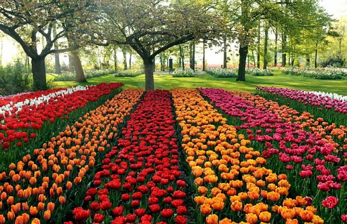 3925073_Keukenhof_tulip_park_1 (700x452, 170Kb)
