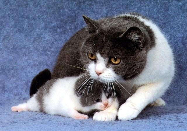 кошка с котенком (640x449, 83Kb)