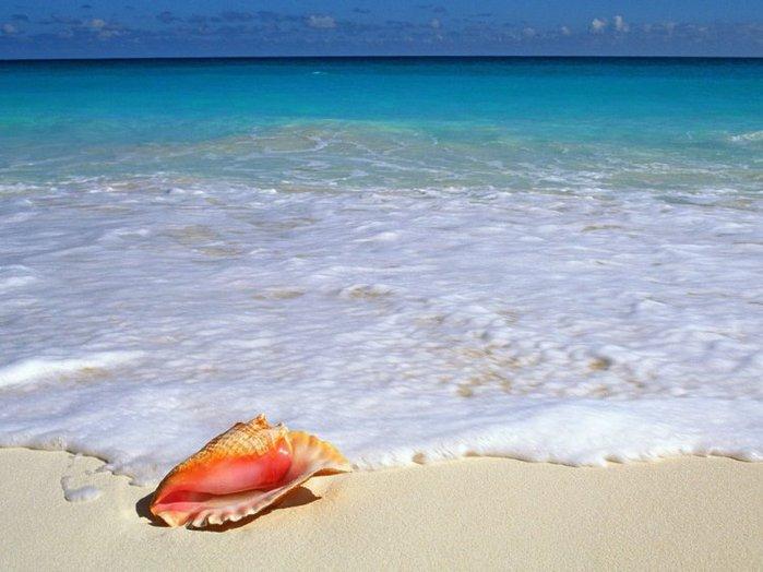 морские ракушки фото 5 (700x524, 60Kb)
