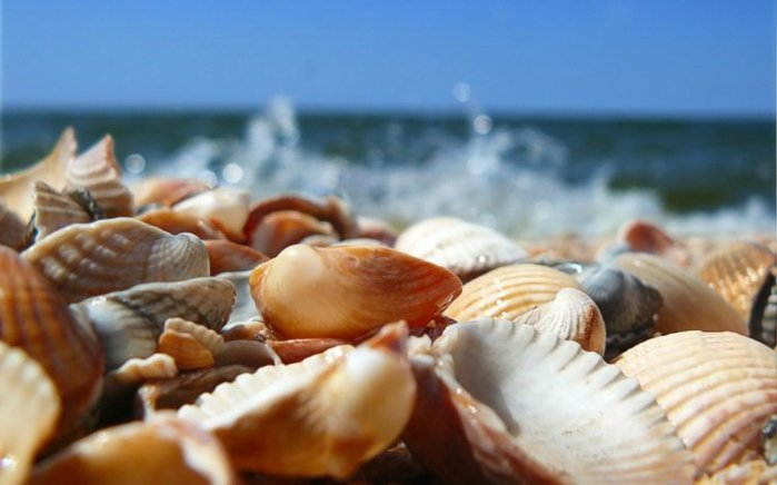морские ракушки фото 6 (700x436, 44Kb)