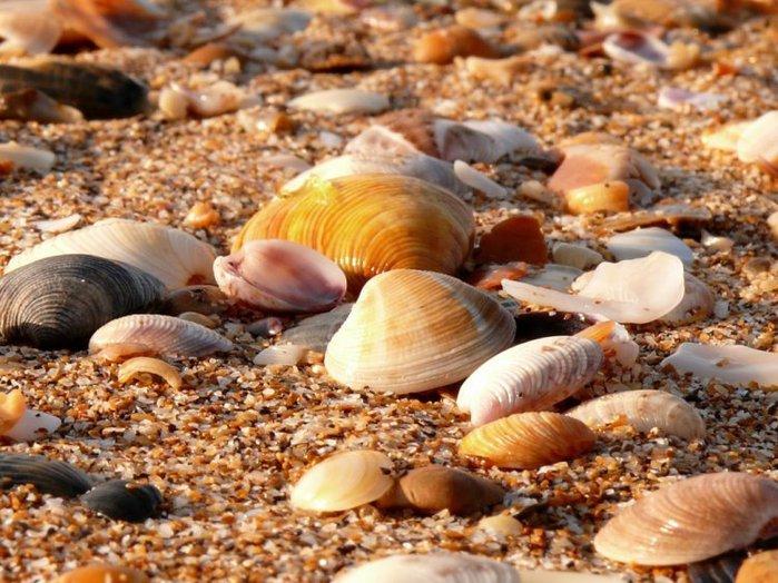 морские ракушки фото 7 (700x524, 100Kb)