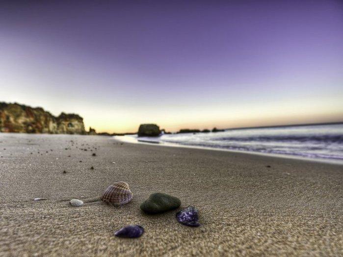 морские ракушки фото 10 (700x524, 60Kb)
