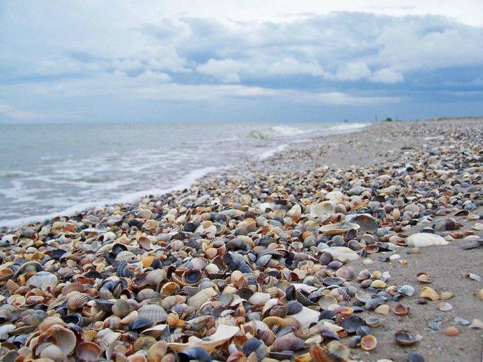 морские ракушки фото 11 (700x524, 94Kb)