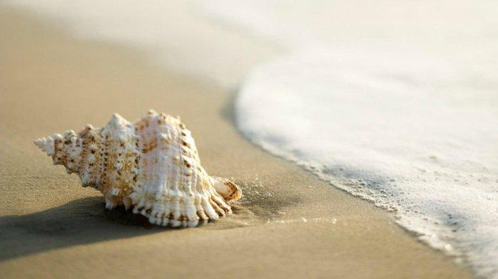 морские ракушки фото 12 (700x392, 30Kb)