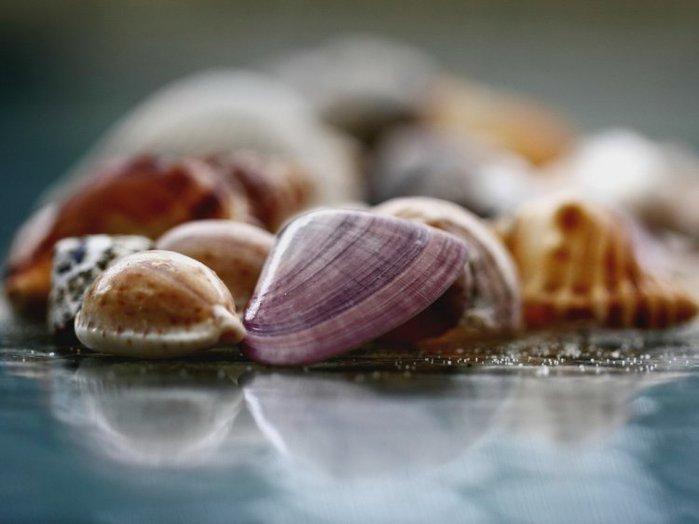 морские ракушки фото 14 (700x524, 40Kb)