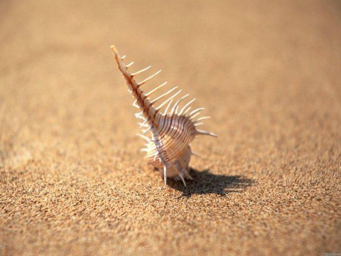 морские ракушки фото 16 (700x524, 58Kb)
